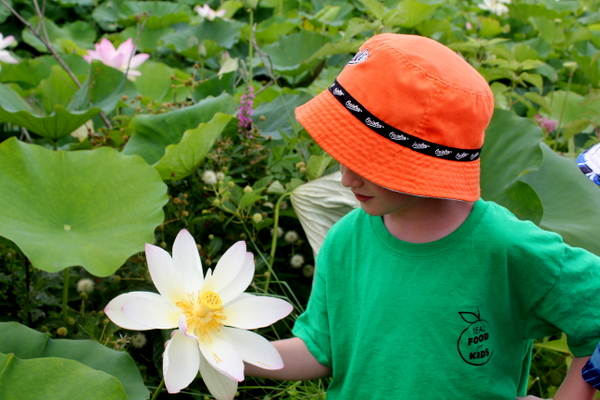 Kenilworth Aquatic Gardens child with lotus