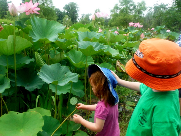 Kenilworth Aquatic Gardens children looking at lotus