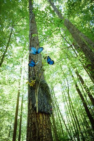 Annmarie Sculpture Garden butterfly