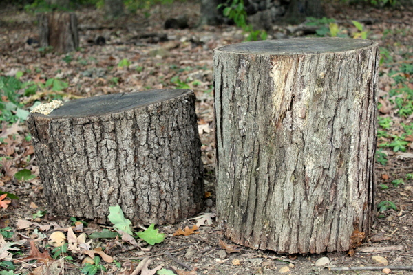 two stumps that became a table and chair