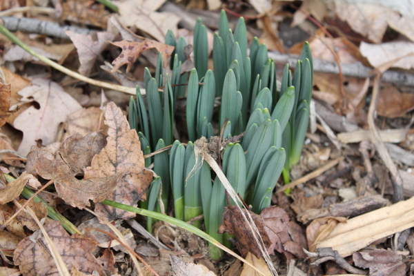 Winter into Spring: gardening, health and wellness events at a glance