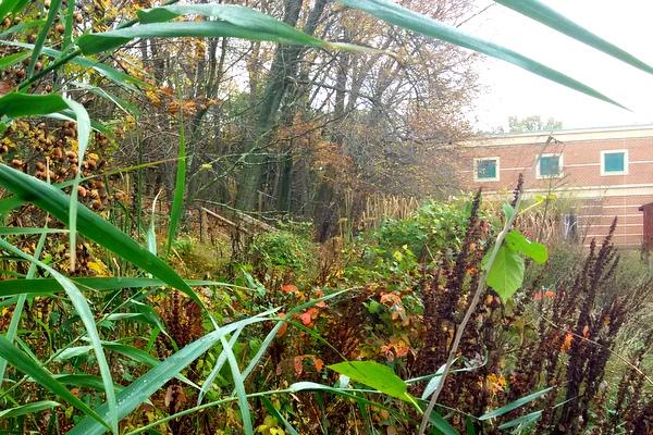Campbell Wetlands November 2016