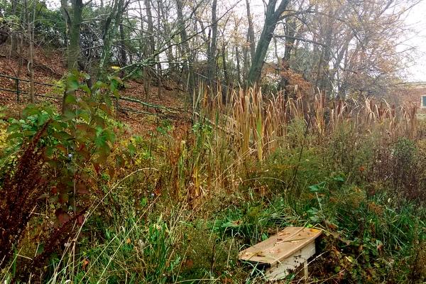 Campbell Wetlands bench November 2016