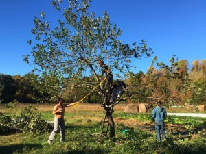 Permaculture Design Certificate Course @ Centro Ashé Farm   Bryans Road   Maryland   United States