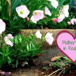 Mother's Day 2016: Reflections from local moms