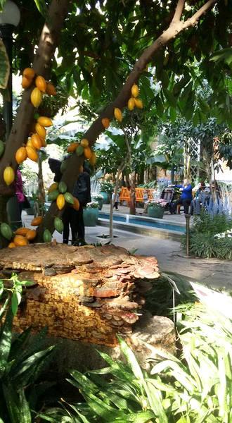 us-botanic-gardens-seasons-greenings-2016-mindful-healthy-life-national-museum-of-the-american-indian