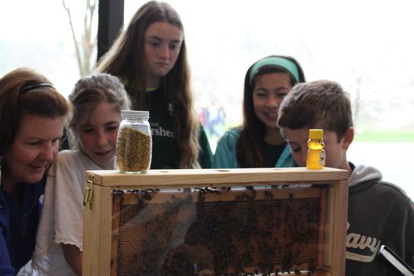 NoVA Outside School Environmental Action Showcase Hive Alive