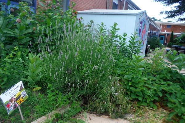 APS Growing Green Schools Garden Meetup Jamestown Elementary 6-8-15  garden sign 2