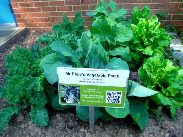 APS Growing Green Schools Garden Meetup Jamestown Elementary 6-8-15  green garden patch