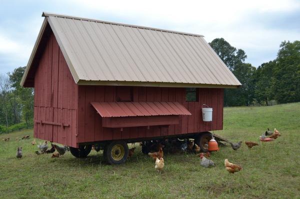 PA Bowen Farmstead chickens