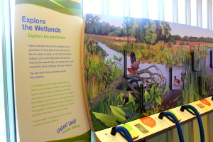 National Museum of the American Indian - -Wetlands - Mindful Healthy Life - Jessica Claire Haney